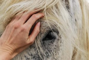 signs of a healthy horse