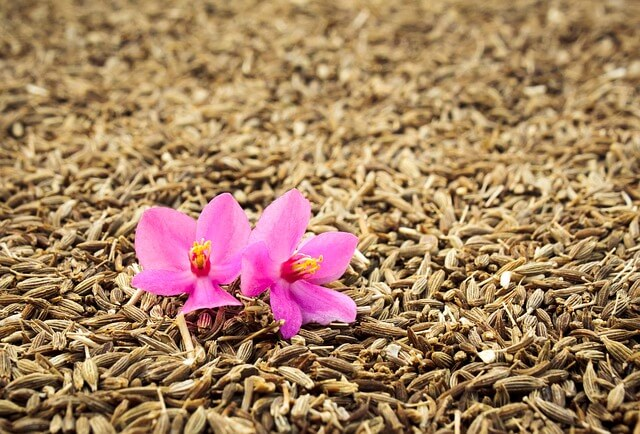 Cumin - Best herbs and spices with health benefits