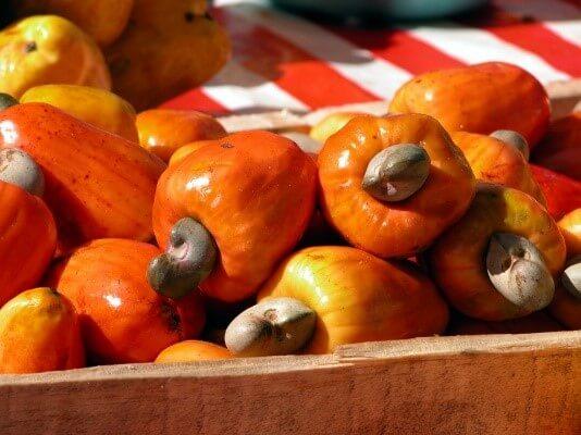 Start Cashew Farming
