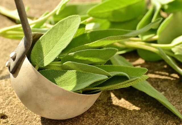 sage - herbs for health and healing