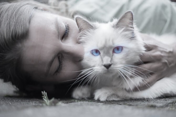 Dying Cat Symptoms: Signs That Show a Cat is Dying - Just Credible