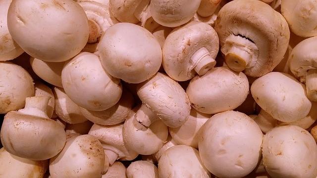 Mushroom Farming Business Plan