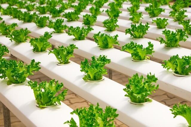 hydroponic farm business