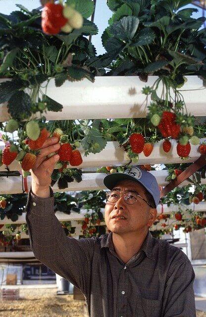 hydroponic farming tips