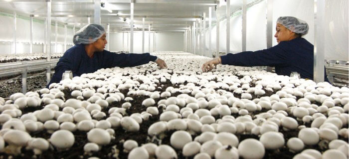 How to Start a Profitable Mushroom Farming Business - Just