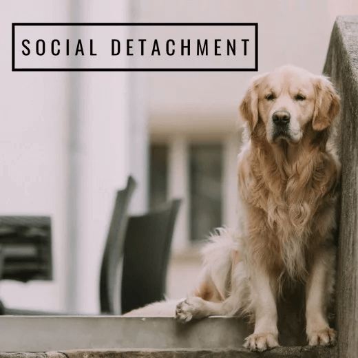 pet social detachment