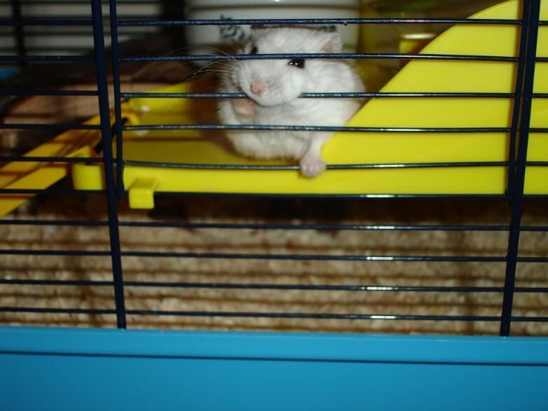 Hamster habitats