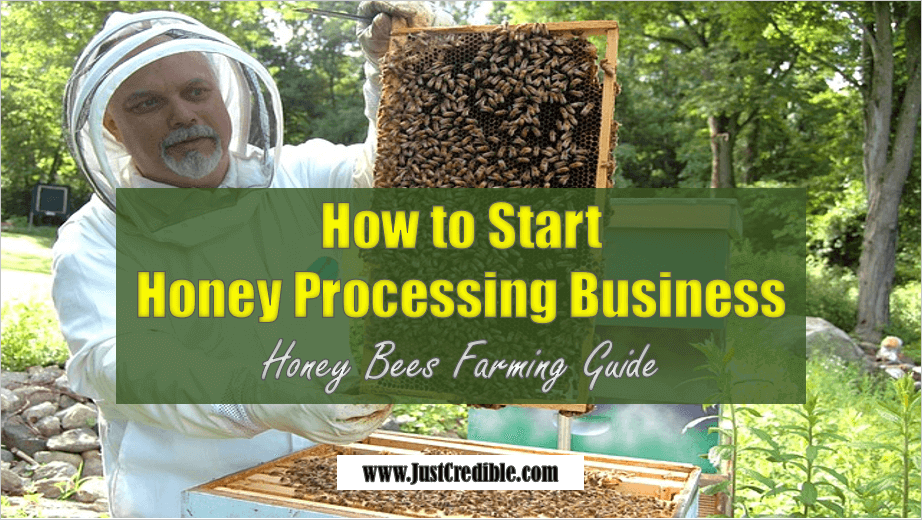 Honey Bee Farming - Honey Processing Business
