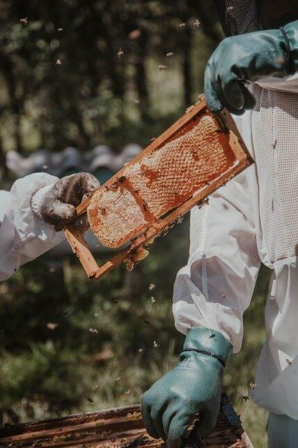 Honey Bees Farming