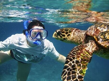 Galapagos Islands, South America -snorkeling-with-giant-turtles