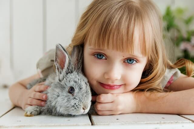 Top Pet Rabbit Breeds