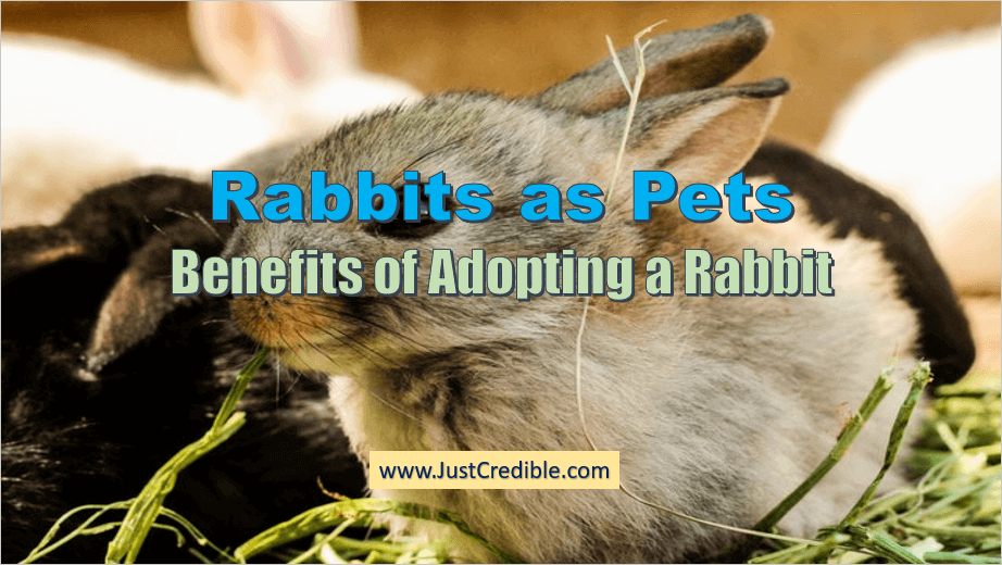 Rabbits as Pets - Benefits of Adopting a Pet Rabbit