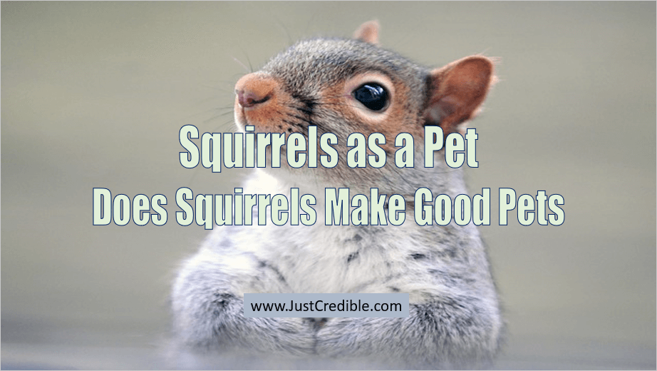 Squirrels as a Pet