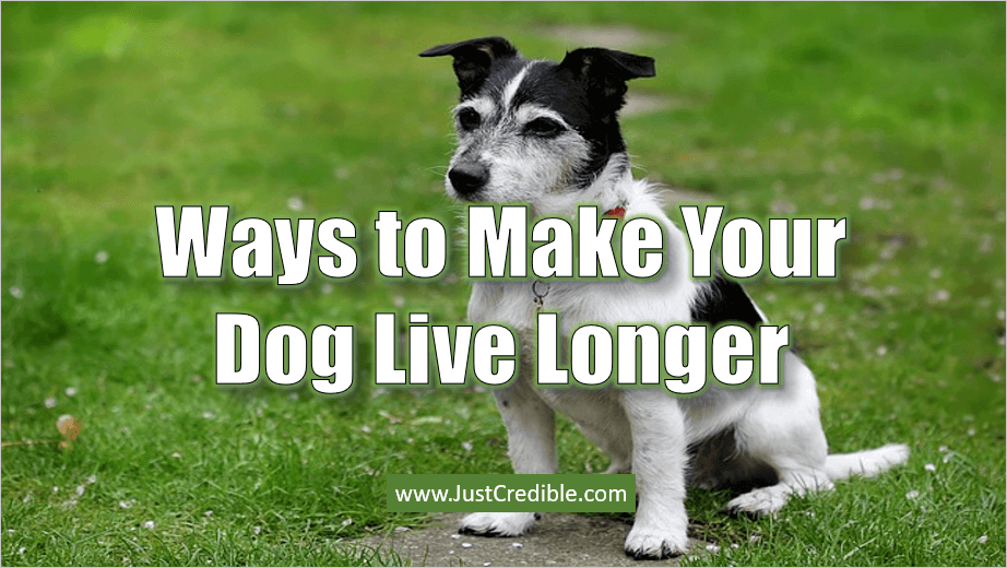 Make Your Dog Live Longer
