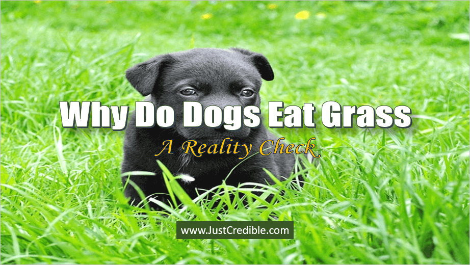 Why Do Dogs Eat Grass Sometimes