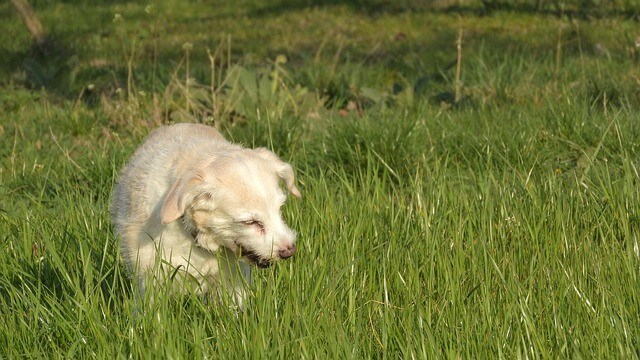 is it ok for dogs to eat grass