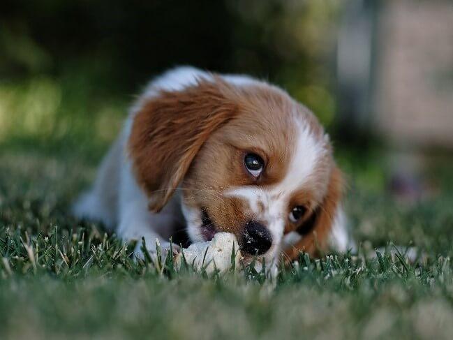 when dogs eat grass