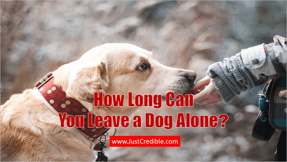 How Long Can You Leave a Dog Alone