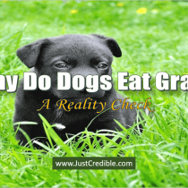Why Do Dogs Eat Grass? Is Eating Grass Good for Dogs